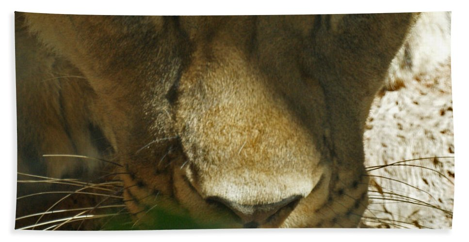 Lion Bath Sheet featuring the photograph I See You 2 by Ernie Echols