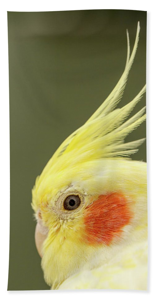 Yellow Budgies Hand Towel featuring the photograph I See You by Maria Ollman