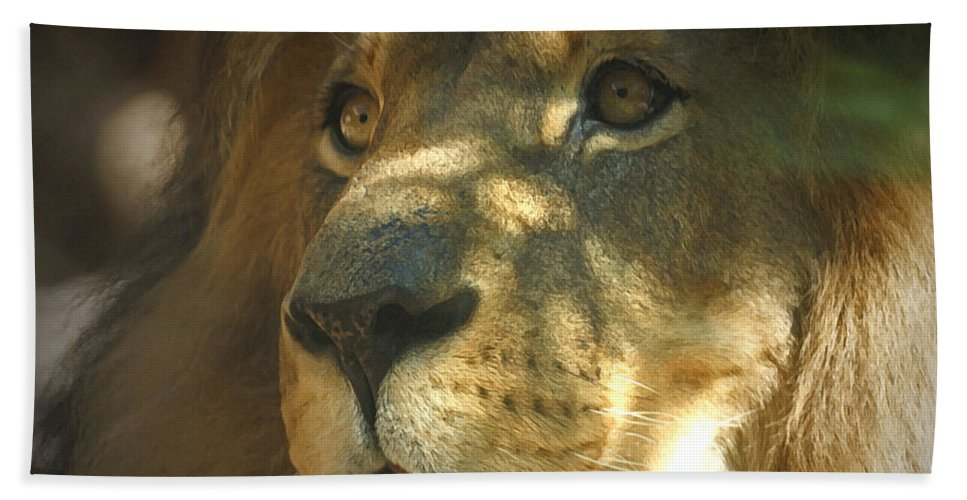 Lion Bath Sheet featuring the photograph I Want Some by Ernie Echols
