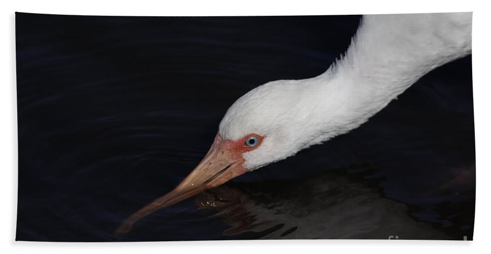 Ibis Hand Towel featuring the photograph Ibis Drinking by Deborah Benoit