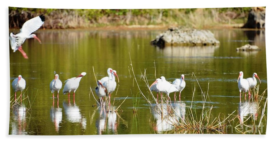 Rock Bath Sheet featuring the photograph Ibis Pool Party by Lisa Kilby