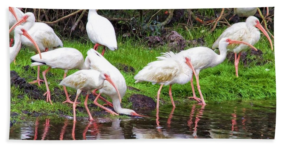 Alicegipsonphotographs Hand Towel featuring the photograph Ibis Reflections by Alice Gipson