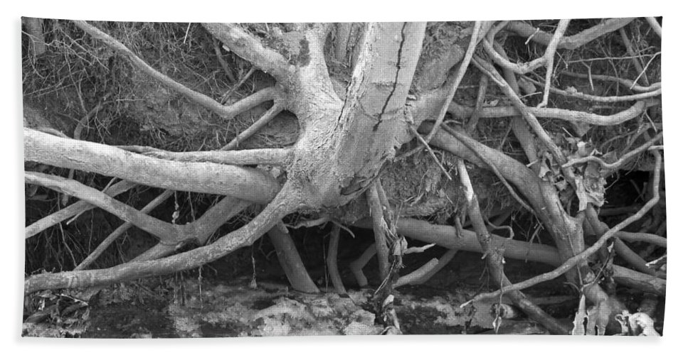 Bare Tree Roots Hand Towel featuring the photograph Twisted Roots by Sandra Church