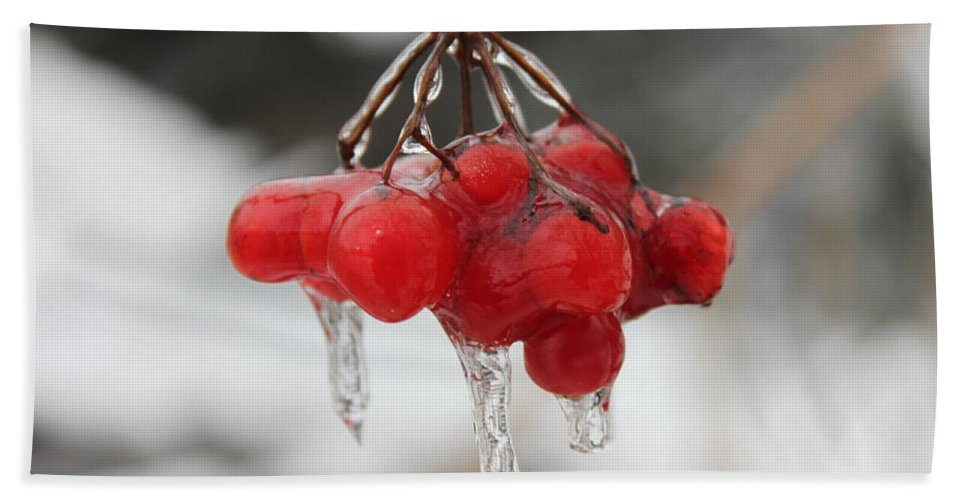 Ice Hand Towel featuring the photograph Ice Wrapped Berries by Lauri Novak