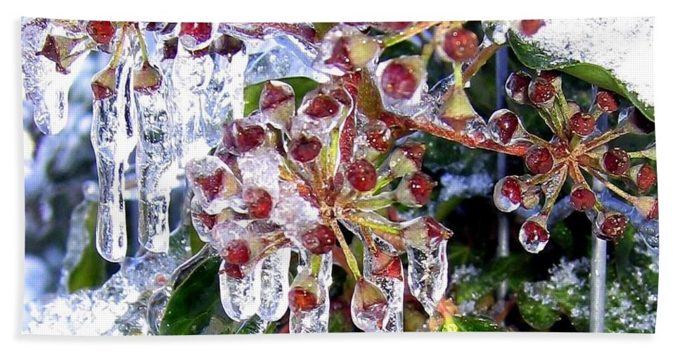 Iced Ivy Hand Towel featuring the photograph Iced Ivy by Will Borden