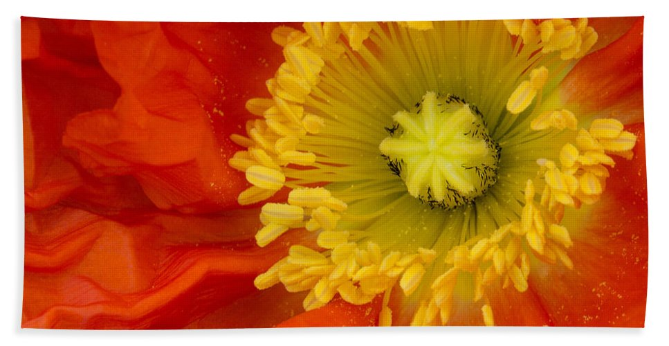 Poppy Hand Towel featuring the photograph Iceland Poppy by Emma England