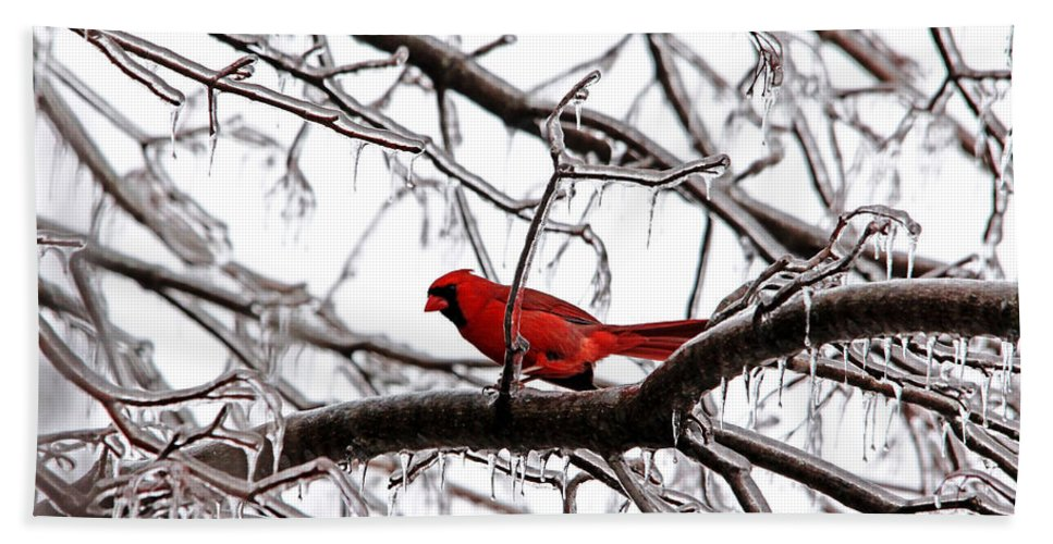 Northern Red Cardinal Hand Towel featuring the photograph Icy Perch by Debbie Oppermann