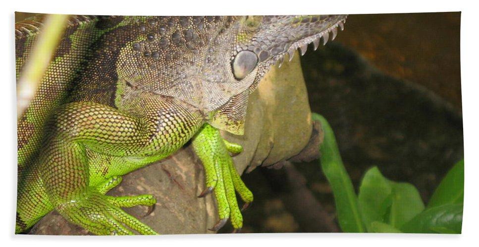 Iguana Bath Sheet featuring the photograph Iguana - A Special Garden Guest by Christiane Schulze Art And Photography