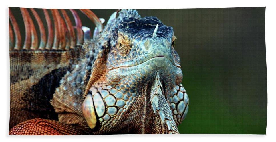 Iguana Hand Towel featuring the photograph Iguana by Kenneth Imler