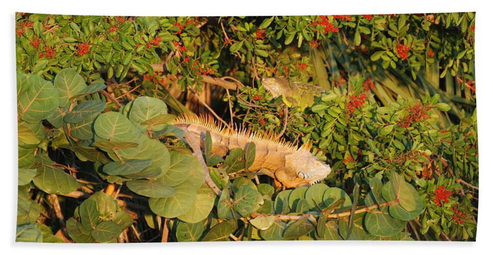 Sunset Hand Towel featuring the photograph Iguanas by Rob Hans