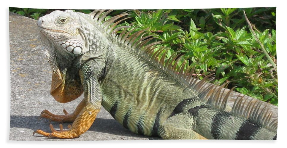 Iguania Hand Towel featuring the photograph Iguania Sunbathing by Christiane Schulze Art And Photography