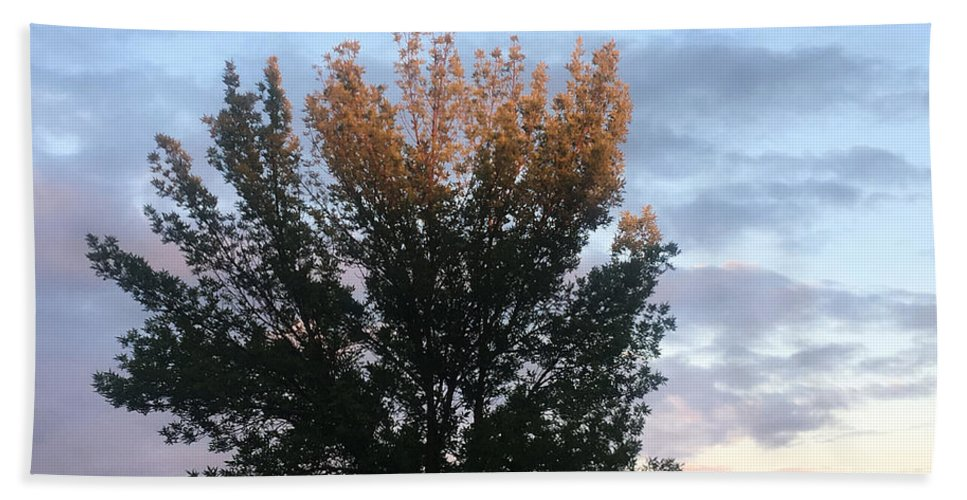 Sun Set Hand Towel featuring the photograph Illuminated Tree Top by Amy Lionheart