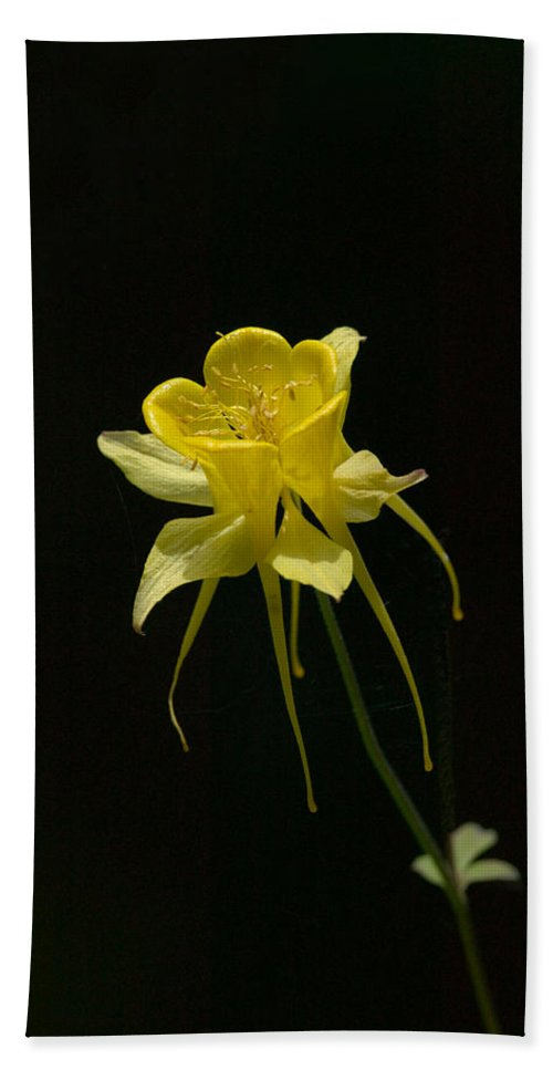 Floral Hand Towel featuring the photograph Ilumination by Randall Ingalls