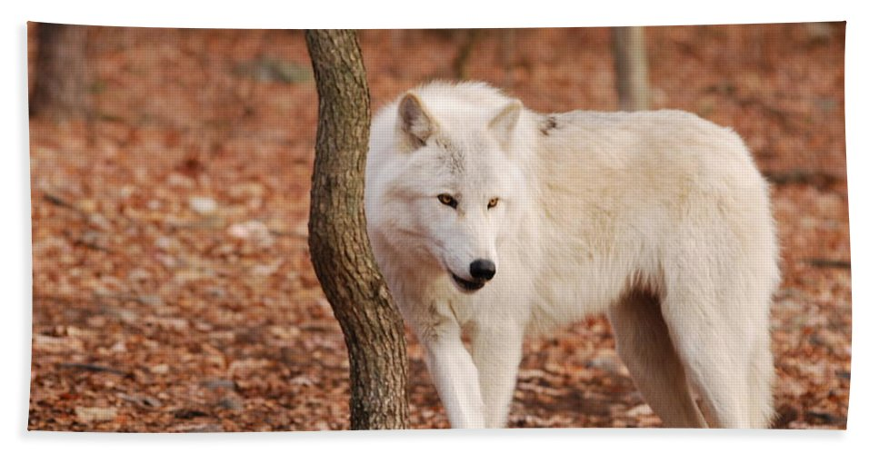 Wolf Hand Towel featuring the photograph I'm A Wolf by Lori Tambakis