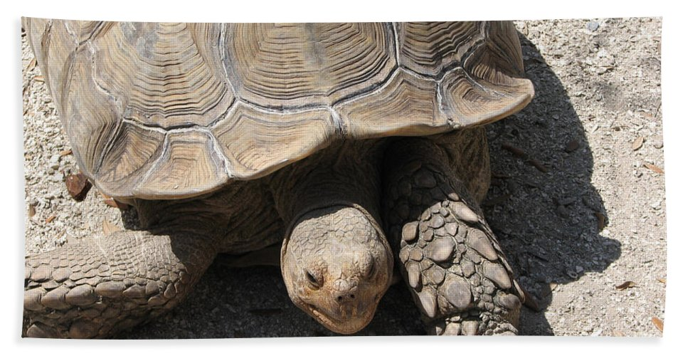 Turtle Hand Towel featuring the photograph Im Moving by Stacey May