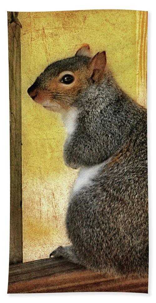 Squirrel Bath Sheet featuring the photograph I'm Sorry by Lois Bryan