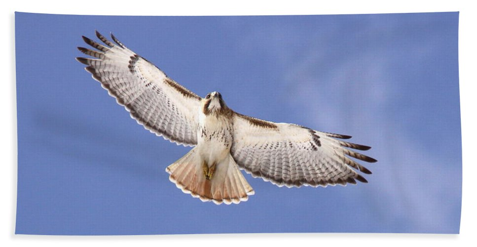 Red-tailed Hawk Bath Sheet featuring the photograph Img-0001 - Red-tailed Hawk by Travis Truelove