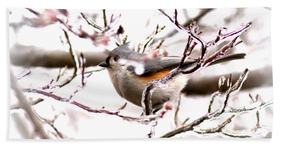 Tufted Titmouse Bath Sheet featuring the photograph Img_0001 - Tufted Titmouse by Travis Truelove