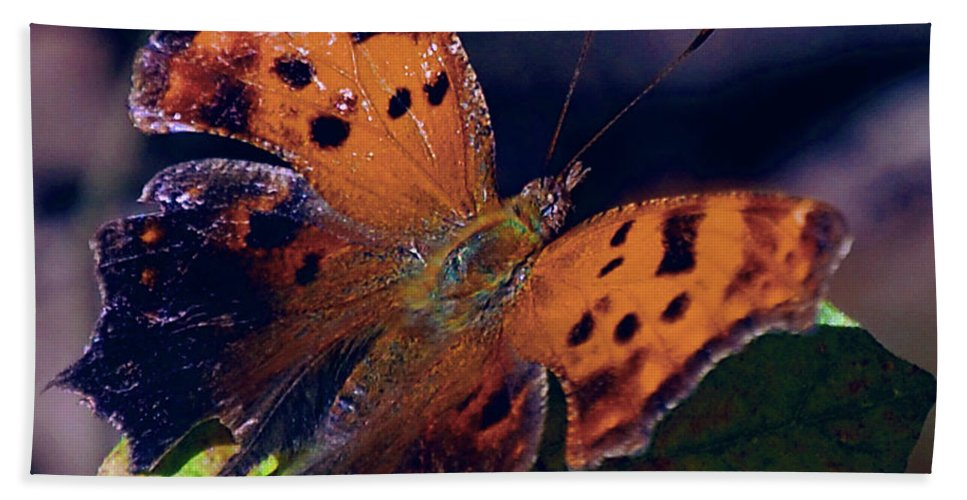 Butterfly Hand Towel featuring the digital art Imperfect Satyr Comma by DigiArt Diaries by Vicky B Fuller