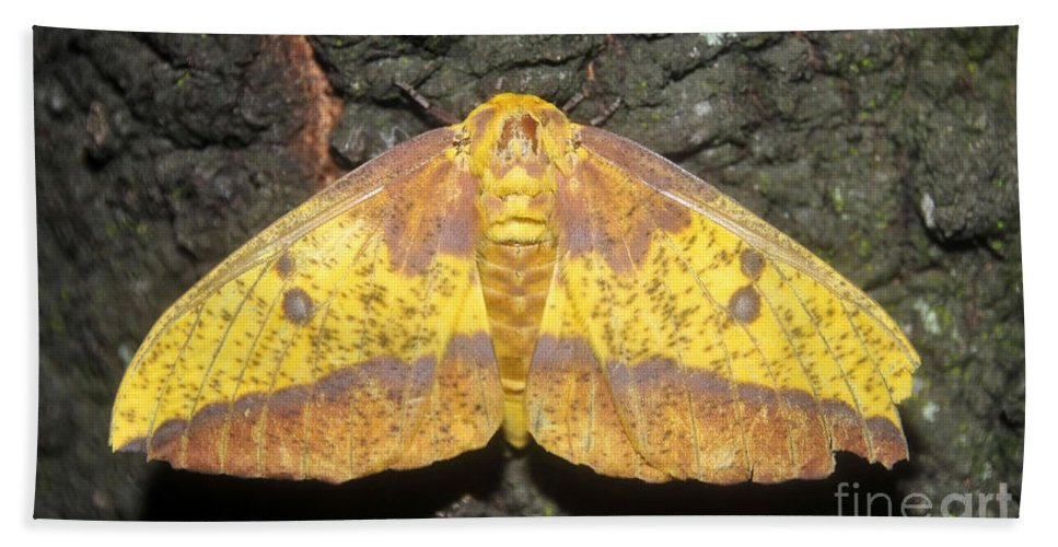 Imperial Moth Bath Sheet featuring the photograph Imperial Moth by David Lee Thompson