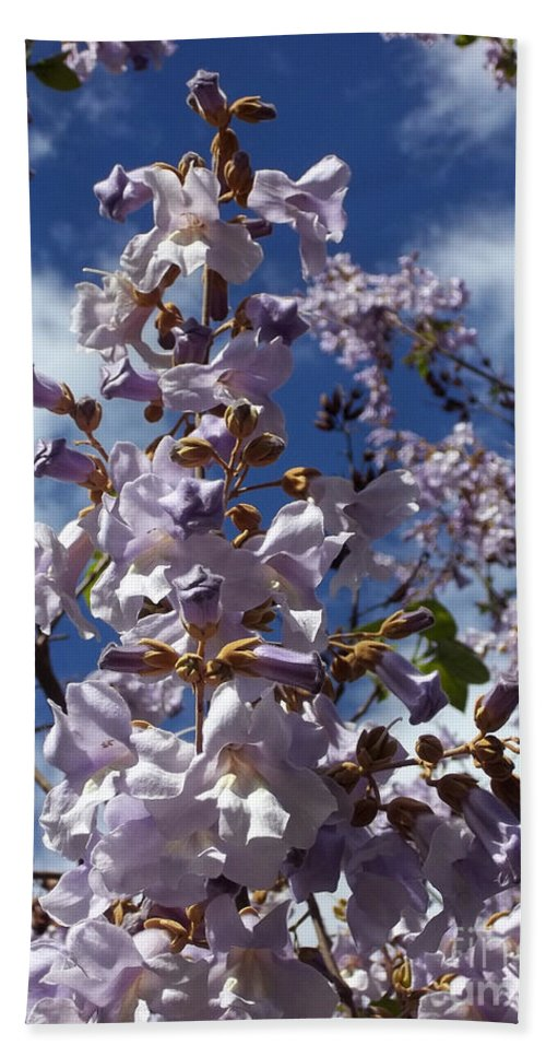 Imperial Tree Hand Towel featuring the photograph Imperial Tree Flowers by Augustus Gallia