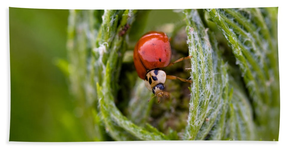 Agriculture Bath Sheet featuring the photograph Imposter Ladybug by Venetta Archer
