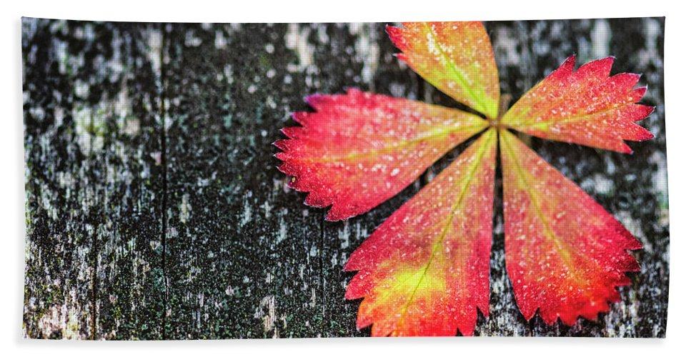 Kremsdorf Bath Towel featuring the photograph Impressions Of Autumn by Evelina Kremsdorf