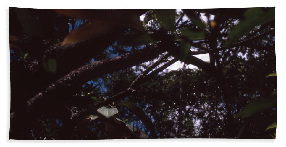 Bahia Bath Sheet featuring the photograph In A Brazilian Forest by Patrick Klauss