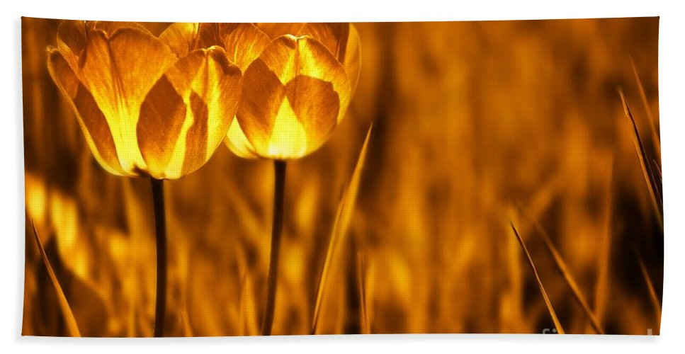 Tulips Bath Sheet featuring the photograph In A Perfect World by Jacky Gerritsen
