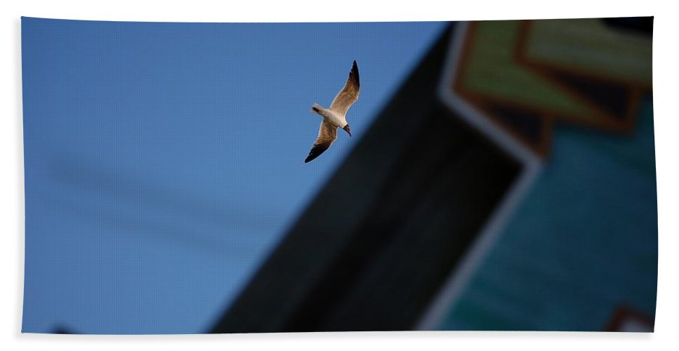 Seagull Bath Sheet featuring the photograph In Flight by Robert Meanor