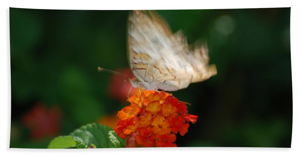Butterfly Hand Towel featuring the photograph In Living Color by Rob Hans