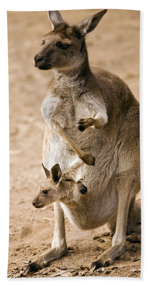 Kangaroo Hand Towel featuring the photograph In Mother's Care by Mike Dawson