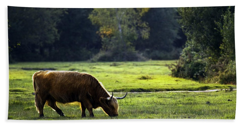 Heilan Coo Bath Towel featuring the photograph in New Forest by Angel Ciesniarska