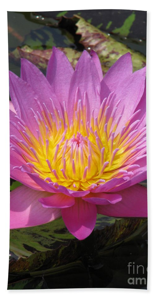 Lotus Bath Sheet featuring the photograph In Position by Amanda Barcon