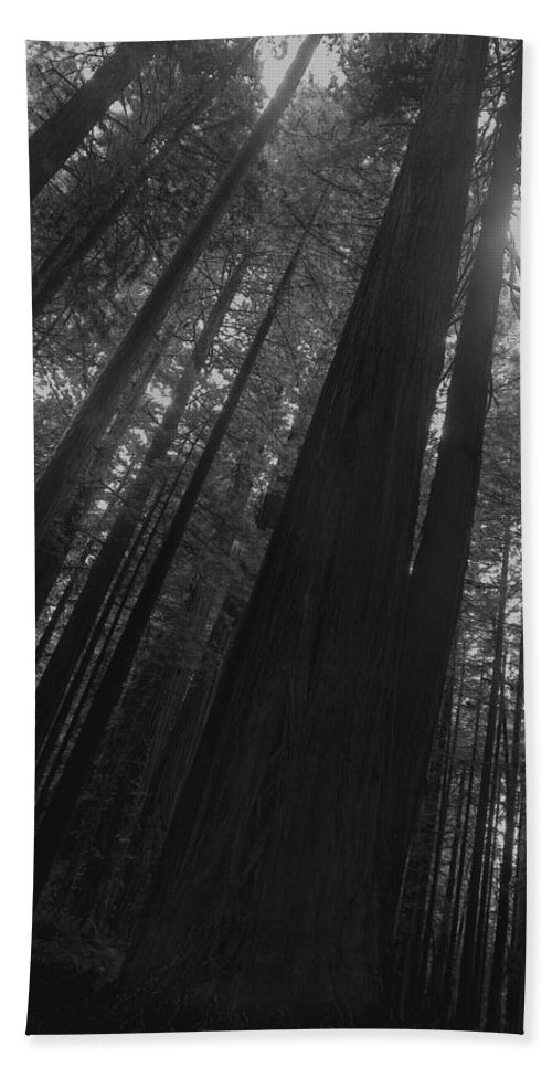 Nature Bath Towel featuring the photograph In The Forest by John K Sampson