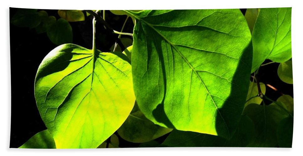 Lilac Leaves Hand Towel featuring the photograph In The Limelight by Will Borden