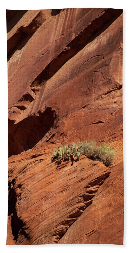 Arizona Bath Sheet featuring the photograph In The Rock Life Will Come by Lucinda Walter