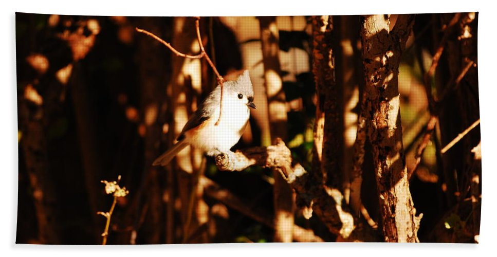 Titmouse Hand Towel featuring the photograph In The Sunlight by Lori Tambakis
