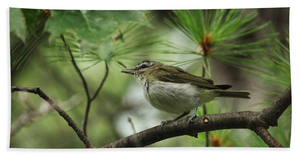 Red Eyed Vireo Hand Towel featuring the photograph In The Treetops by Debbie Oppermann