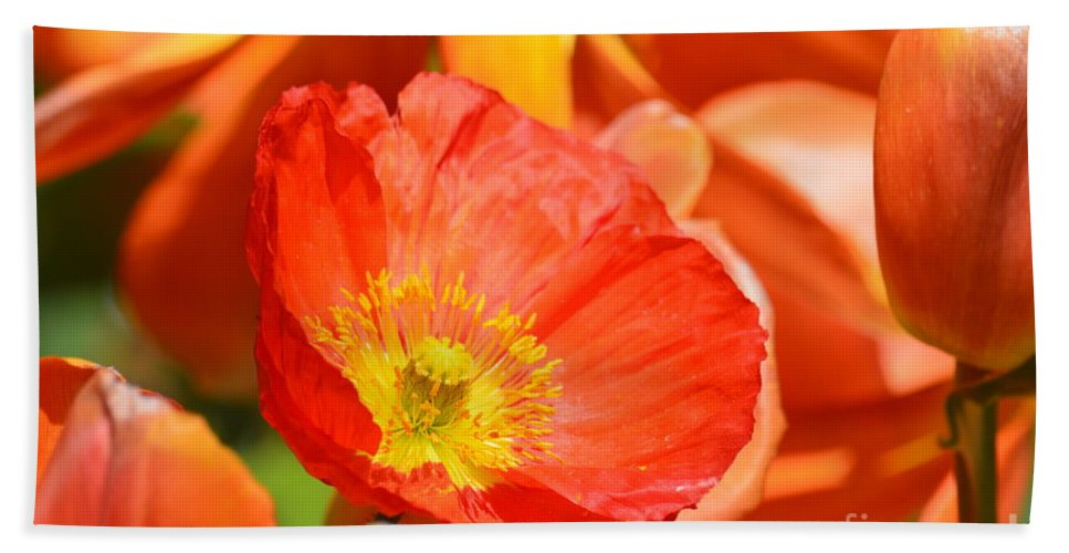 In The Tulip Garden Hand Towel featuring the photograph In The Tulip Garden by Maria Urso