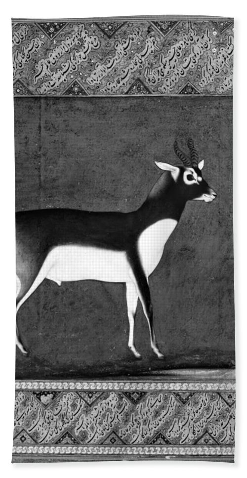 17th Century Bath Sheet featuring the photograph India: Black Buck by Granger