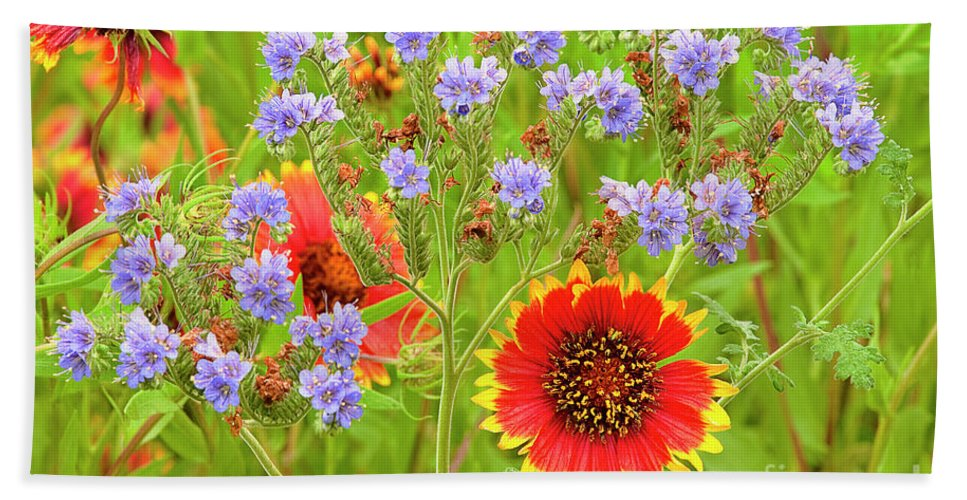 Blanketflowers Hand Towel featuring the photograph Indian Blanketflowers Gaillardia Puchella by Dave Welling