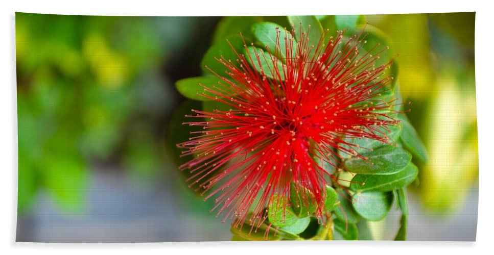 Art For Sale Hand Towel featuring the photograph Indian Bottlebrush Flower by Sonali Gangane
