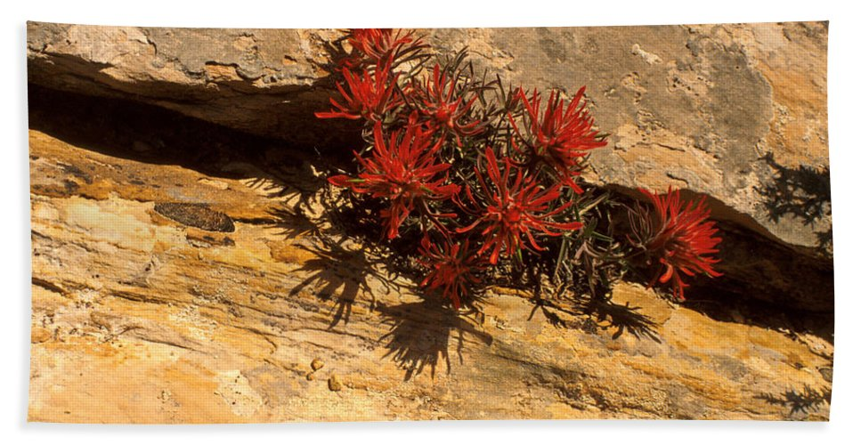 Indian Paint Brush Bath Sheet featuring the photograph Indian Paint Brush by Jerry McElroy