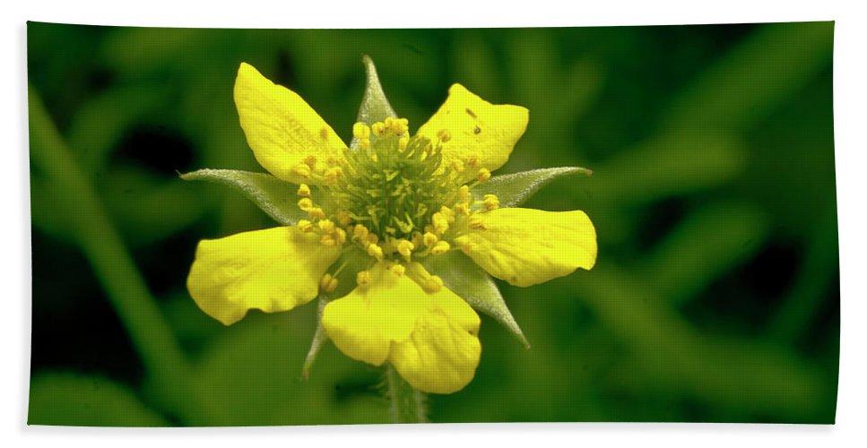 Duchesnea Indica Bath Sheet featuring the photograph Indian Strawberry Flower by Elena Perelman