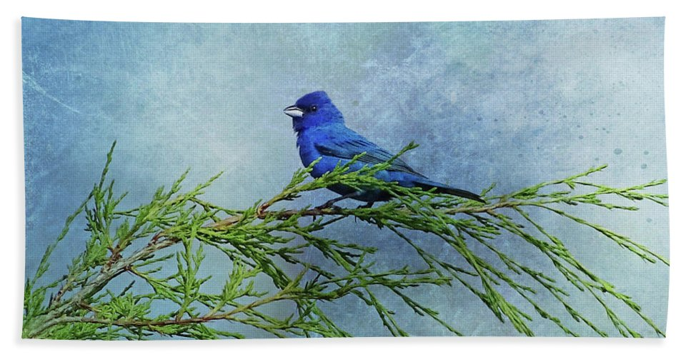 Indigo Bunting Hand Towel featuring the photograph Indigo Bunting On Pine by Sandy Keeton