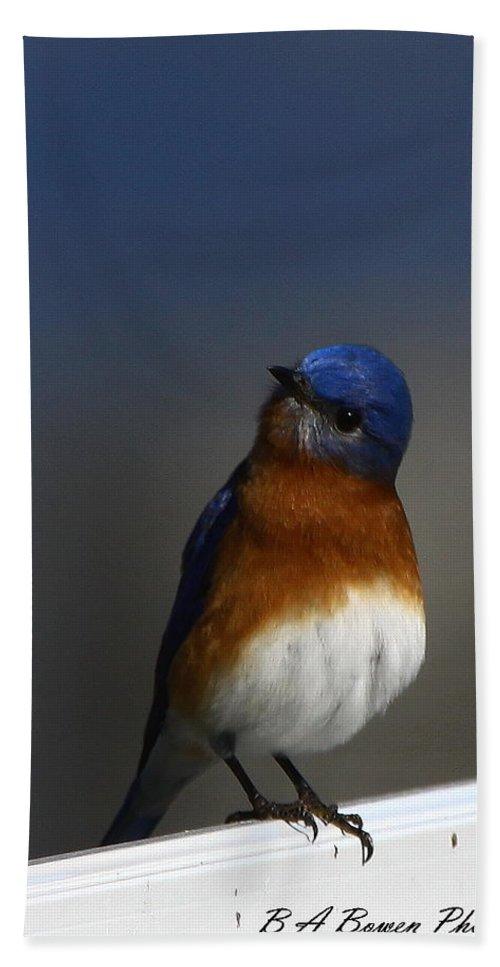 Eastern Bluebird Bath Sheet featuring the photograph Inquisitive Bluebird by Barbara Bowen