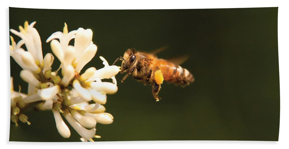 Savad Bath Sheet featuring the photograph Insect - Bee - Honey I'm Home by Mike Savad