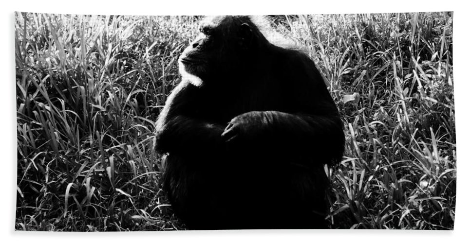 Smart Hand Towel featuring the photograph Intelligence by David Lee Thompson