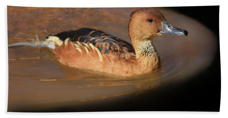 Ducks Hand Towel featuring the photograph Into The Darkness by Kim Henderson